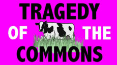 tragedy of the commons